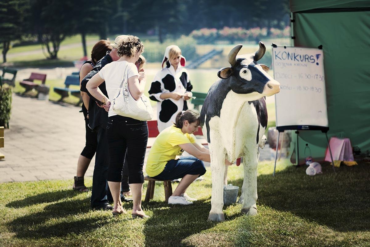 sztuczna-krowa-do-dojenia-organizacja-imprez
