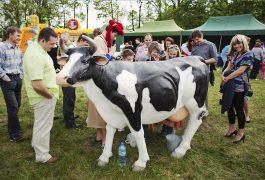 arabski-sztuczna-krowa