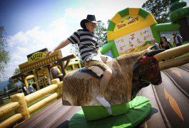 byk-rodeo-zagroda-2