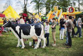 organizacja-imprez-sztuczna-krowa