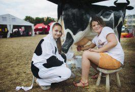 sztuczna-krowa-do-dojenia