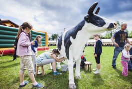sztuczna-krowa-do-dojenia-organizacja-imprezy